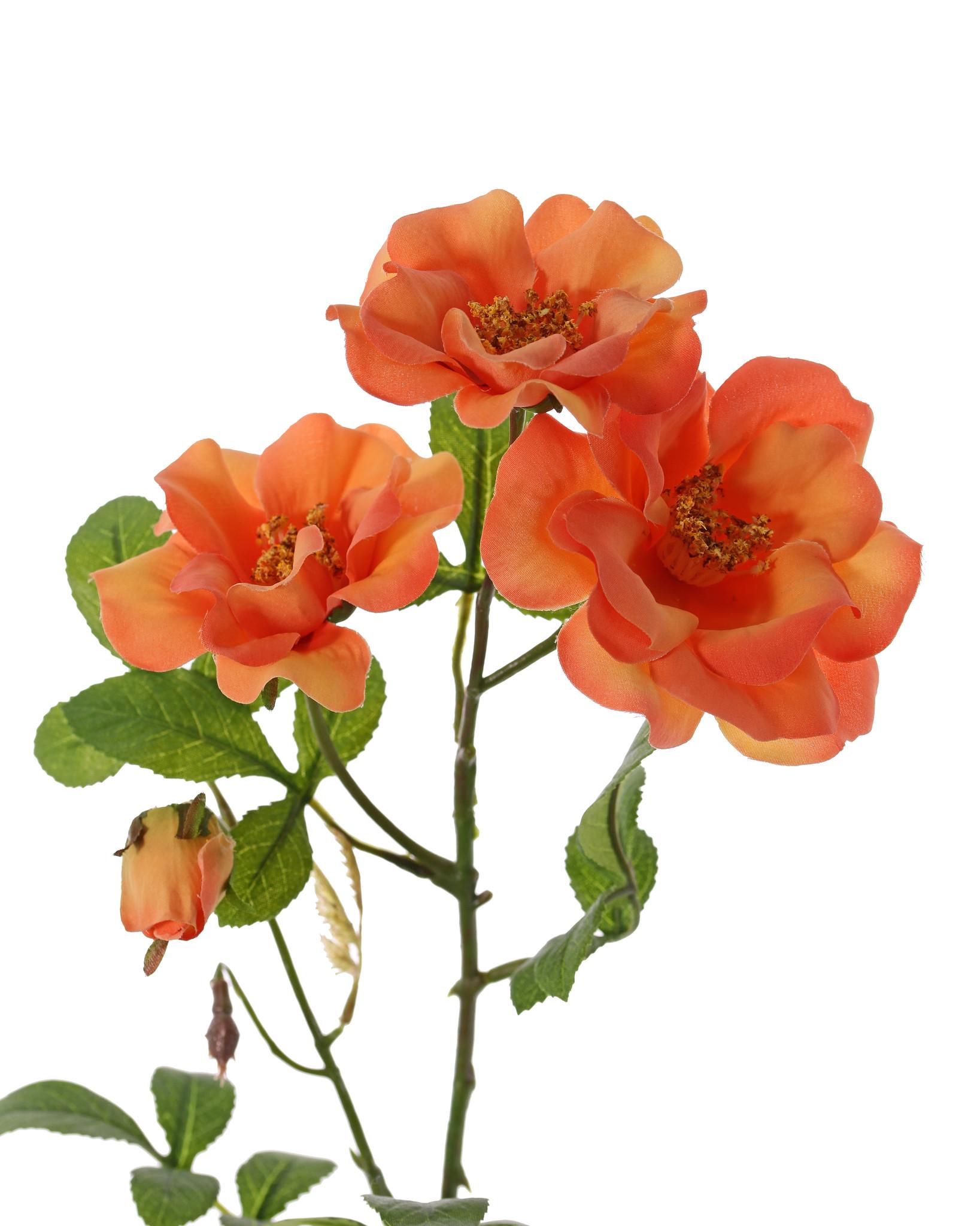 Rosa mosqueta (Rosa rubiginosa), 3 flores (2x Ø 9cm, 1x Ø 7cm) & 1 brote, 24 hojas (6 sets), 60cm