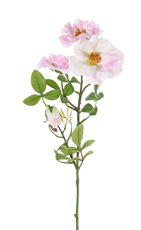 Wein-Rose, Zaun-Rose (Rosa rubiginosa), 3 Blumen (2x Ø 9cm, 1x Ø 7cm) & 1 Knospe, 24 Blätter (6 sets), 60cm