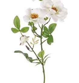 Sweet briarrose (Rosa rubiginosa), 3 flowers (2x Ø 9cm, 1x Ø 7cm) & 1 bud, 24 lvs., (6 sets), 60cm