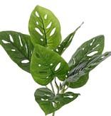 Monstera 'Monkey Leaf' (Gatenplant), met 3 vertakkingen, 7 bladeren (3x groot, 2x middel, 2x klein), Ø 30cm, hoogte: 30cm (inkl. steker)