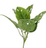 Monstera 'Monkey Leaf' , 3 Verzweigungen, 7 Blätter, Ø 30cm, H. 30cm