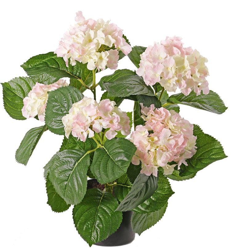 Hortensien 204 Blüten, 30 Blätter, 36cm im Topf