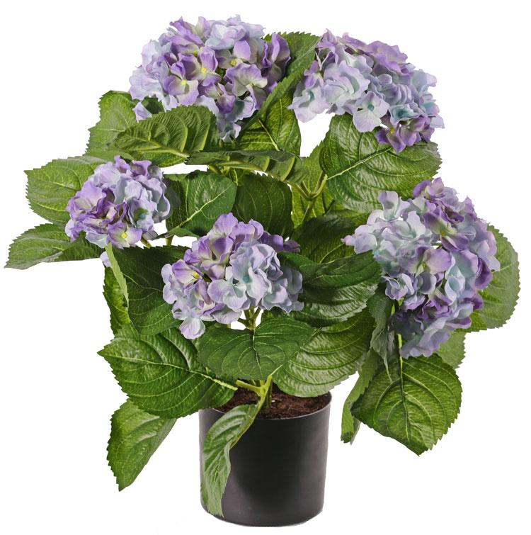 Hortensia met 5 grote bloemtrossen (x204 bloemen) & 30 bladeren, 36 cm, in pot