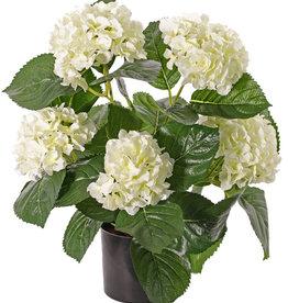 Hortensia 204 flores, 30 hojas, 36cm, en maceta
