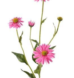 Echinacea pupurea (Purpur Sonnenhut) 5 Verzweigungen, 4 Blumen, 1 Knospe, 9 Blätter, 83cm