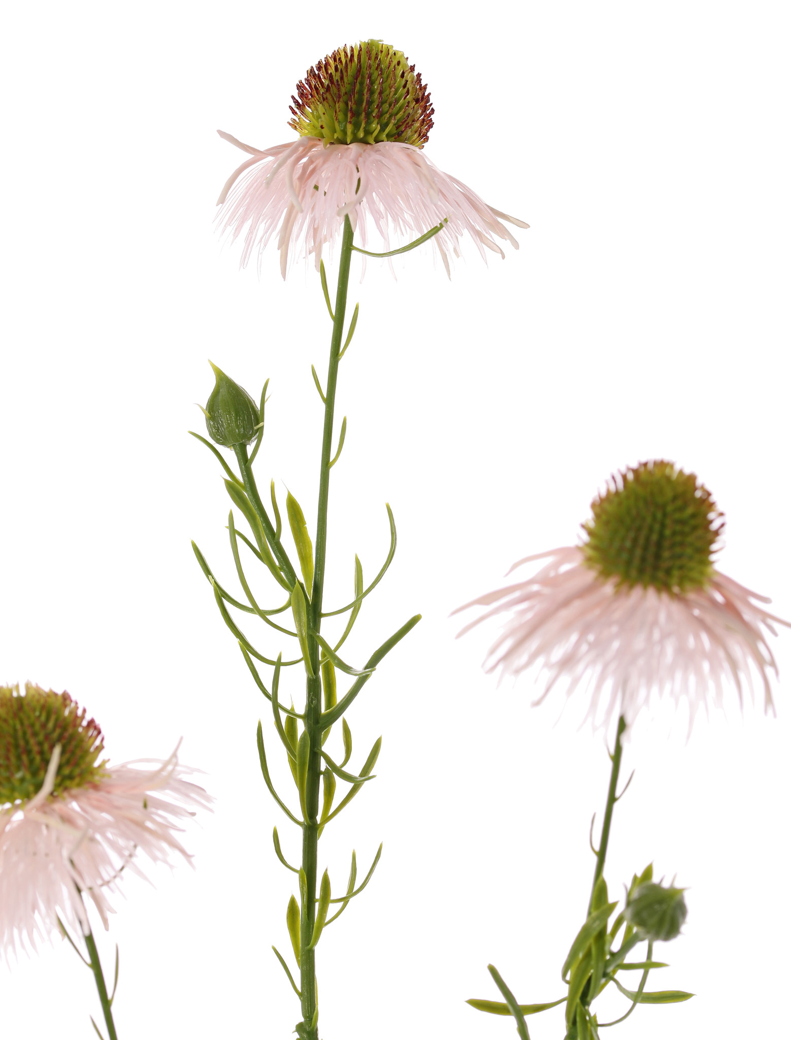 Echinacea pallida (Zonnehoed) 3 bloemen & 3 knop, plastic 60cm