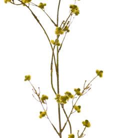 Stirlingia Latifolia (Blueboy), 3 vertakkingen, met 30 clusters bloemen, 83cm