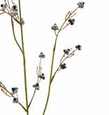 Stirlingia Latifolia (Blueboy), 3 Verzweigungen, 30 Blüten, 83cm