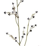 Stirlingia Latifolia (Blueboy), 30 clusters flowers, 83cm
