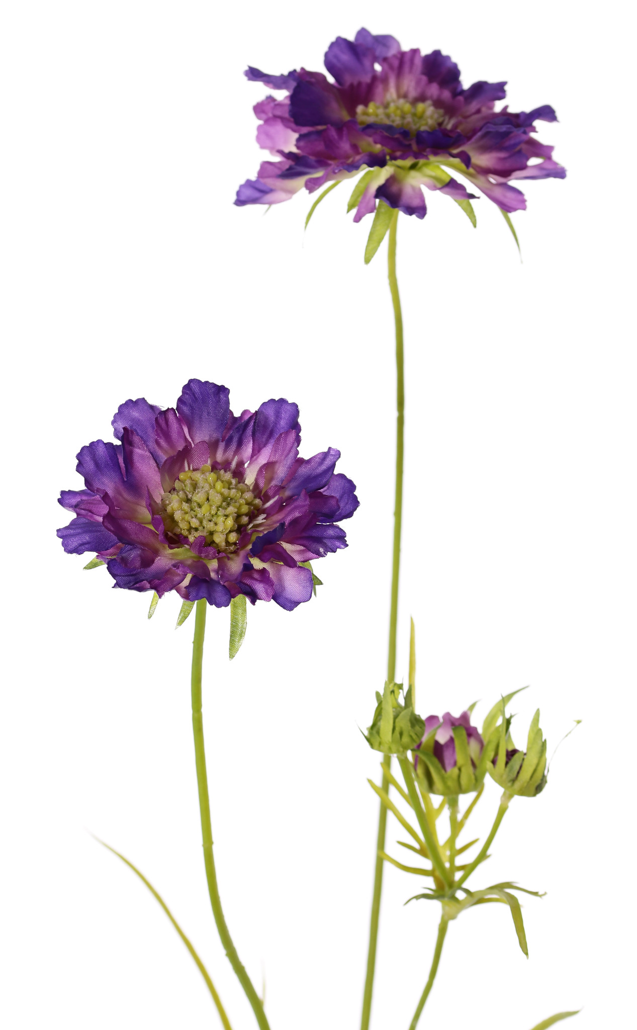 Scabiosa, 2 flores, Ø 10/8cm, 3 capullos, 4 hojas, 80cm
