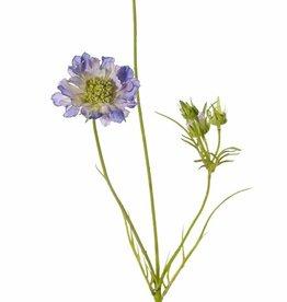 Scabiosen, 3 Verzweigungen, 2 Blumen Ø 10 u. 8 cm, 3 Knospen, 4 Blätter, 80cm