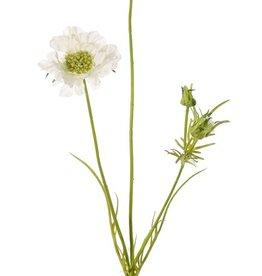 Scabiosa, 2 flowers, Ø10/8cm, 3 buds, 4 lvs., 80cm