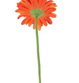 Gerbera single, Ø 12cm, 63 cm