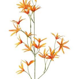 Tweedia bloementak 3 vertakkingen, met 21 bloemen, 73cm