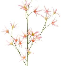 Tweedia branch, with 21 flowers, 73cm