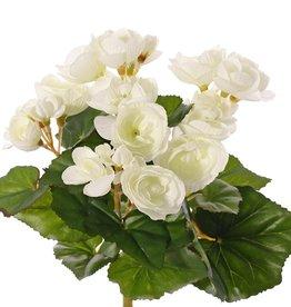 Begonia floreciendo, 36 flores, 24 hojas, Ø 25 cm, H. 20 cm