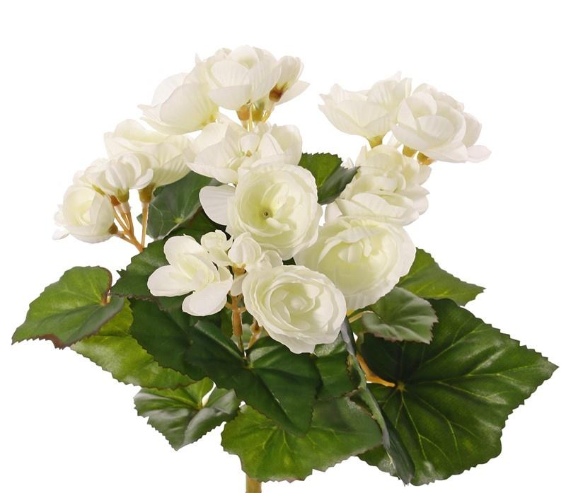 Begonia, blühend, 6 Verzweigungen, 36 Blumen, 24 Blätter, Ø 25 cm, H. 20 cm