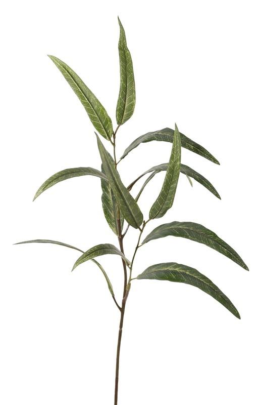 Eucalyptus globulus, Blauer Eukalyptuszweig, (Blaugummibaum) mit 2 Verzweigungen, 13 Blätter, 70cm