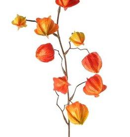 Physaliszweig (Lampionblume, Blasenkirschen) 4 Verzweigungen, met 11 Blasen (4x 5cm/ 3x 4cm/ 3x 3cm) 80cm