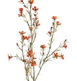 """Waxbloem (Chamelaucium uncinatum) """"de luxe"""", met 26 bloemen & 14 knop, 78cm"""