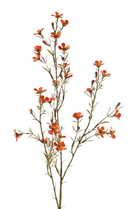 """Hakiges Chamelaucium """"de Luxe"""", 26 Blüten, 78cm"""