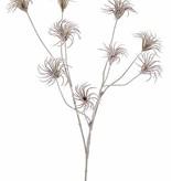 Waldreben-Saatzweig (Clematis) mit 3 Verzweigungen, 9 Samenstände, beflockt, 71cm