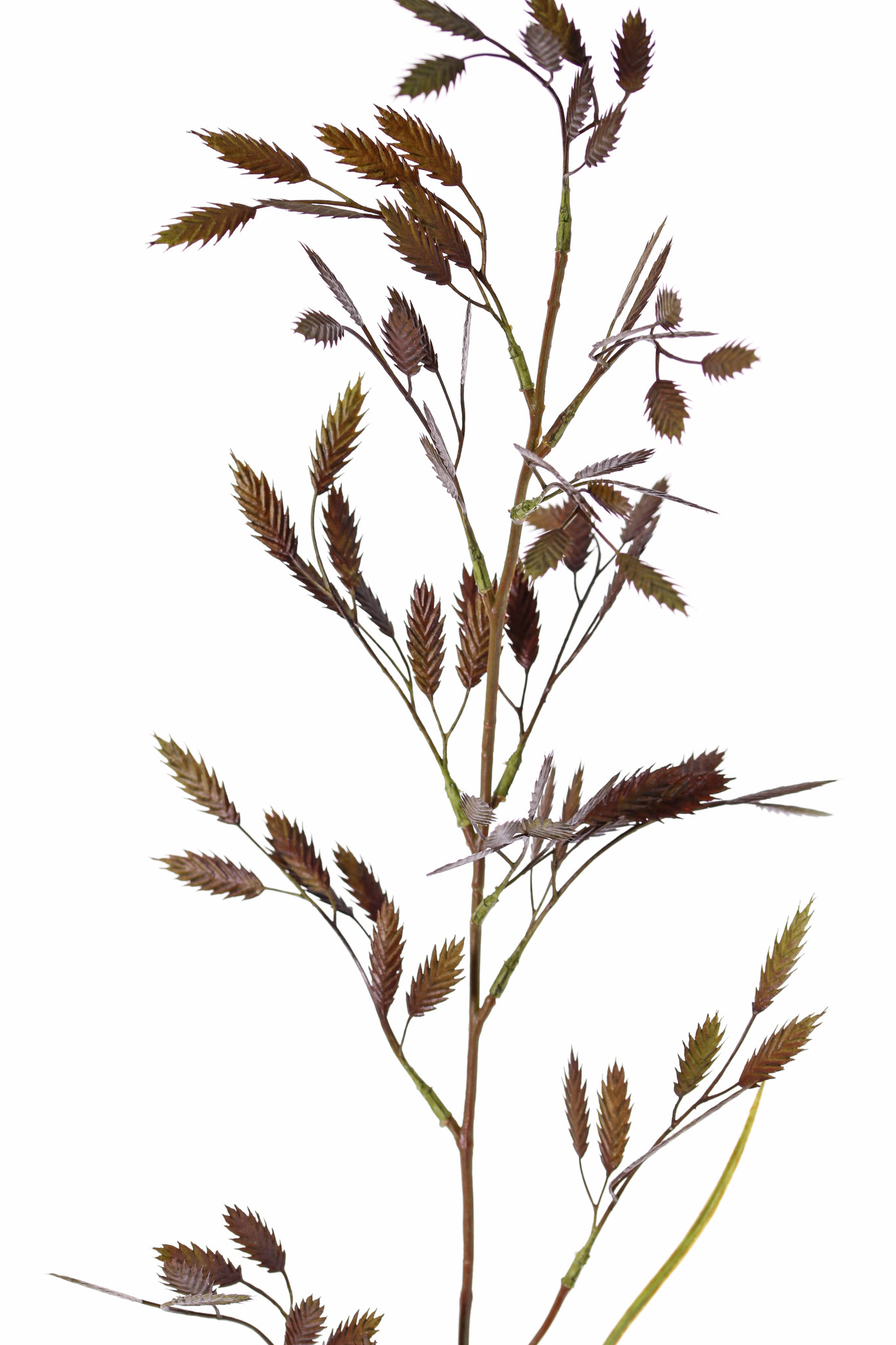 Briza grass, with 13 sprays (91 beavers) & 2 leaves, 98cm