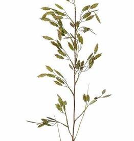 Briza con 13 grupos (91 panojas) & 2 hojas, 98cm