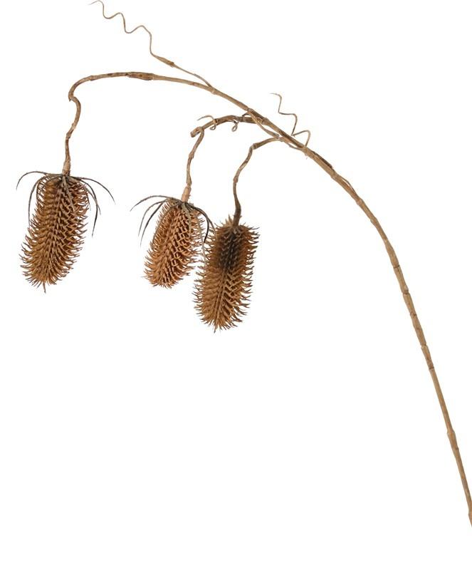 Kardenzweig (Dipsacus) 3 Verzweigungen, 3 Karden (2x 8cm & 1x 6cm), 90cm