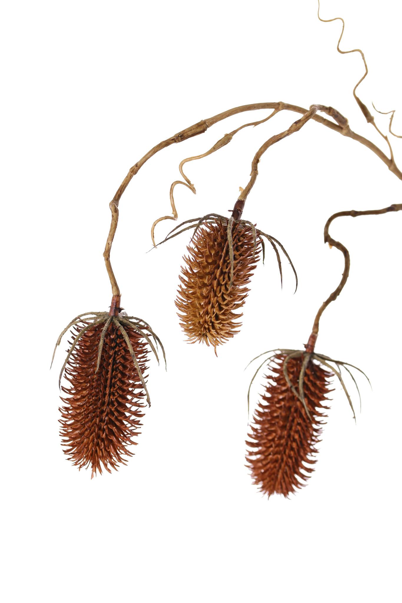 Rama de Dipsacus, con 3 ramitas, 3 frutos (2x 8cm & 1x 6cm), 90cm