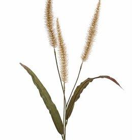 Pennisetum (Lampenputzergras), 3 Blütenstände, 22cm & 2 Blätter, 93cm