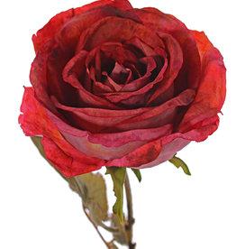 Roos Calista, 1 bloem (Ø 11cm, H.7cm), 2 sets blad (10 blaadjes), 66cm