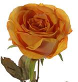 Rose Calista, 1 flower (Ø 11cm, h. 7cm), 2 sets of leaf (10 leaves), 66cm
