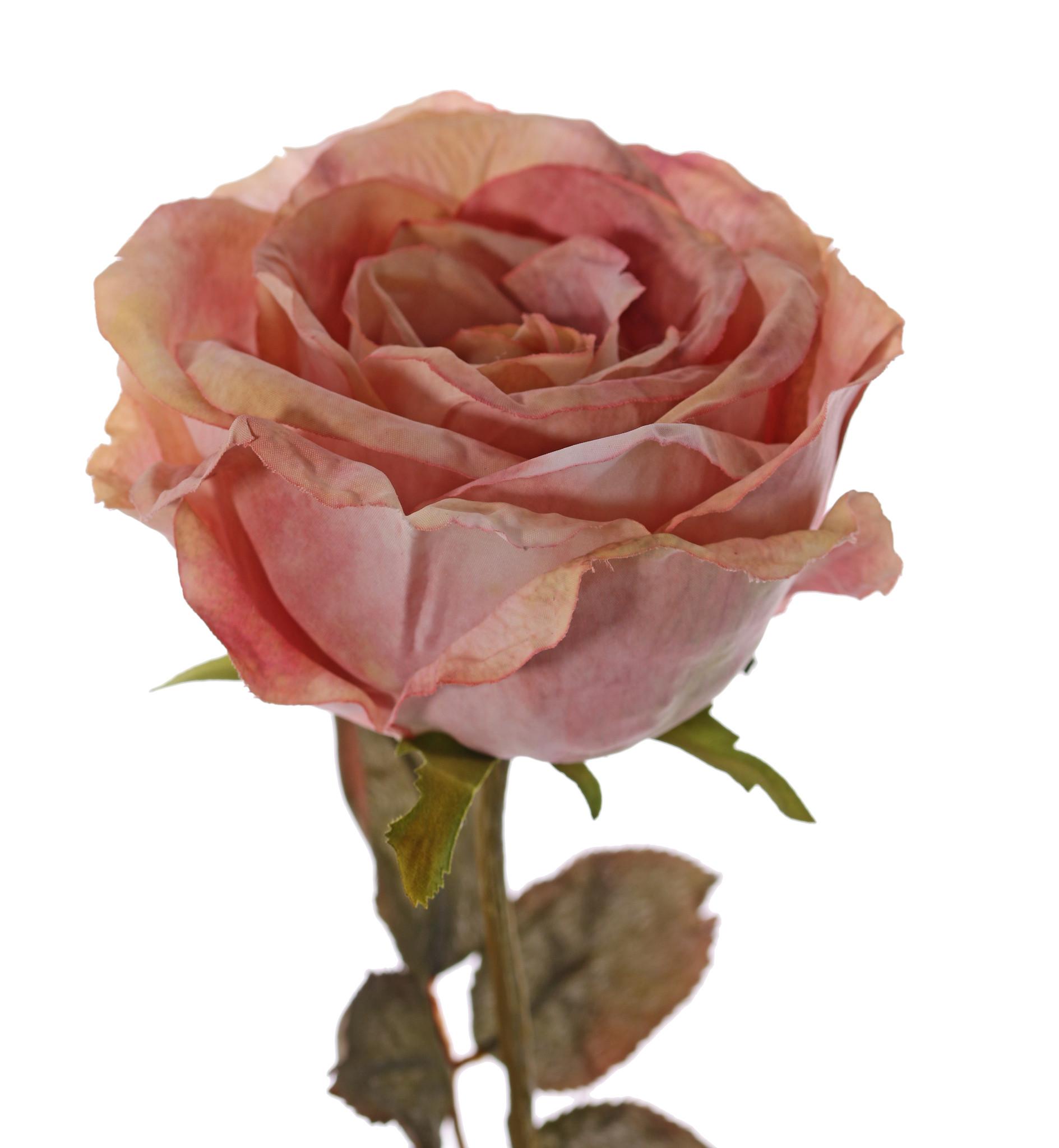 Rose Calista, Ø 11cm, H.7cm, 2 Blattsets (10 Blätter), 66cm