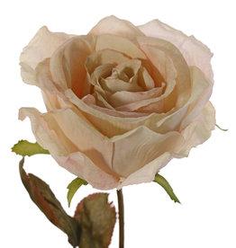 Rosa Calista, 1 flor (Ø 11cm, a.7cm), 2 sets de hojas (10 hojas), 66cm