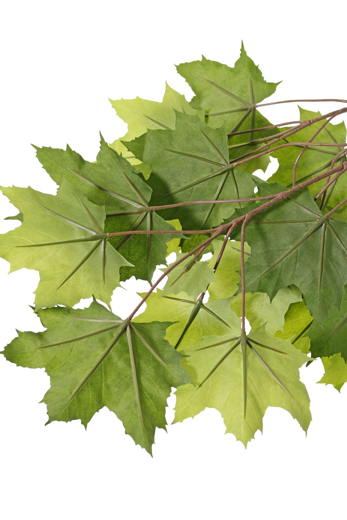 Esdoorn bladtak (Acer pseudoplatanus),5 vertakkingen, 23 bladeren, bruine steel, brandvertragend, 80cm