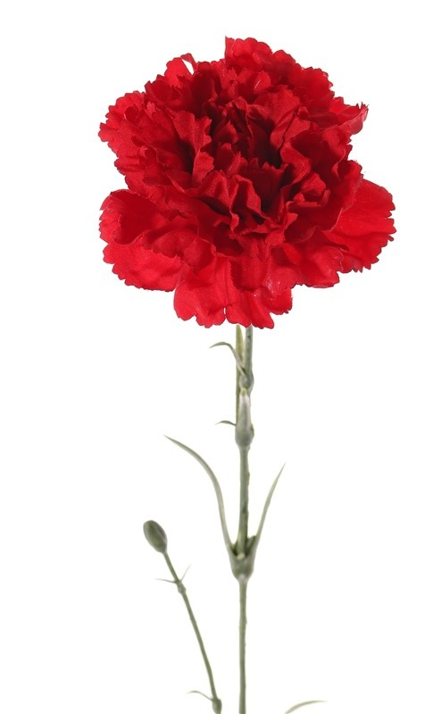 Carnation, plastic buds and leaves, 60cm