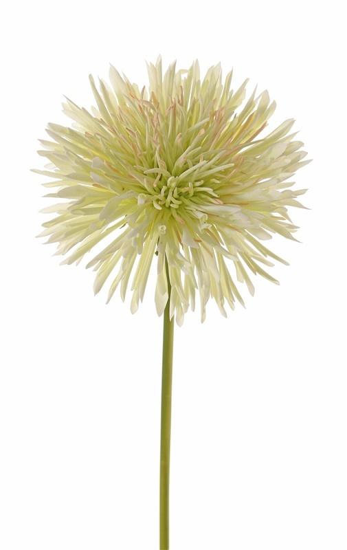 Chrysant (Chrysanthemum), Ø 15 cm, H. 6 cm, 58 cm