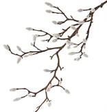 Magnolienzweig, 19 Verzweigungen, viele  Knospen, 73cm