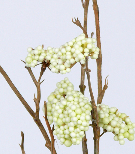 Callicarpa, 20 clusters,  102 cm