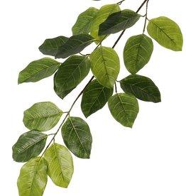 Banyan Ficus benghalensis, 5 vertakkingen, met 20 bladeren, 82 cm, brandvertragend