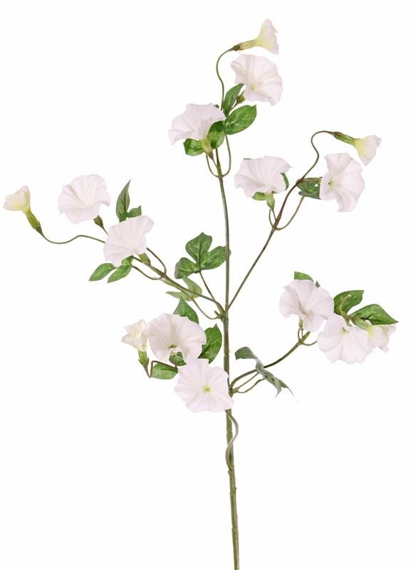 Convolvulaceae, 15 flores & 14 hojas, 63 cm