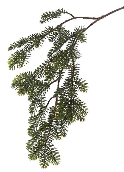 Pine spray (Abies) x6, flat needles, 83cm