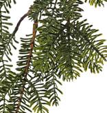 Tannenzweig (Abies) 6 Verzweigungen, platte Nadeln, 83cm