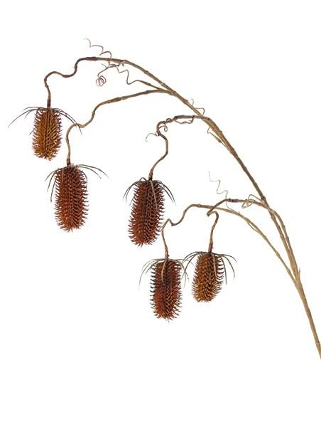 Rama de Dipsacus x5, con 5 frutos (3x 8cm & 2x 6cm), 118cm