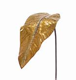 Canna indica blad (Indisch bloemriet) 'Classico', Ø 47 x 20cm, 98cm