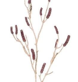 Callistemon - Bottlebrush with 15 seed capsules, 120cm