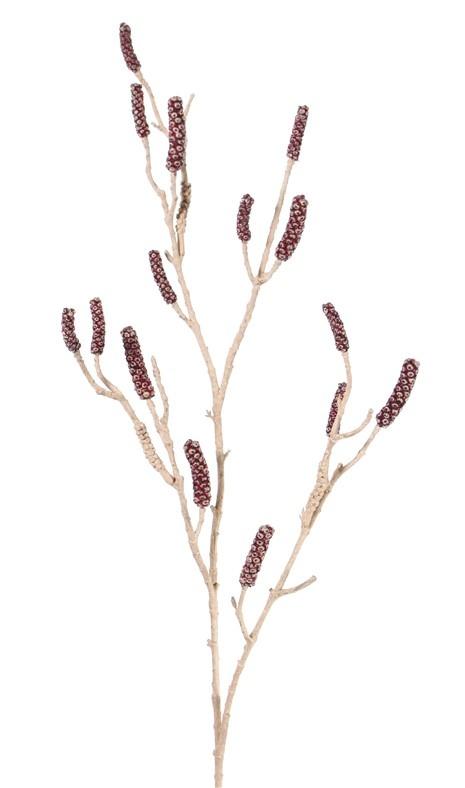 Callistemon (limpiabotellas, calistemo), 120cm