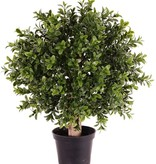 Buxus bal op stam x252 25cm in pot