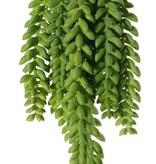 Sedum Morganianum (donkey tail or burro's tail), 9 trailing stems, 2x 25 cm, 4x 18 cm, 3x 15 cm, 846 hojas  31 cm